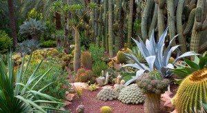 Palmeparken El Hurta de Cura må avlegges en visitt når man er i Elche.